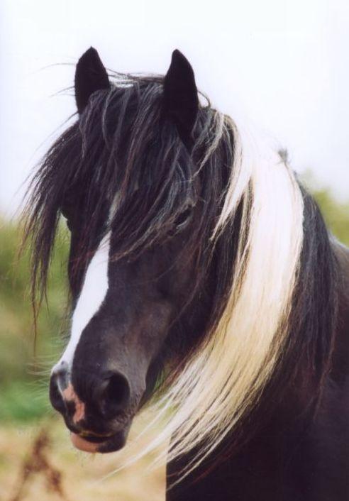 Er sucht sie pferde