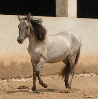 seltene fellfarben pferde