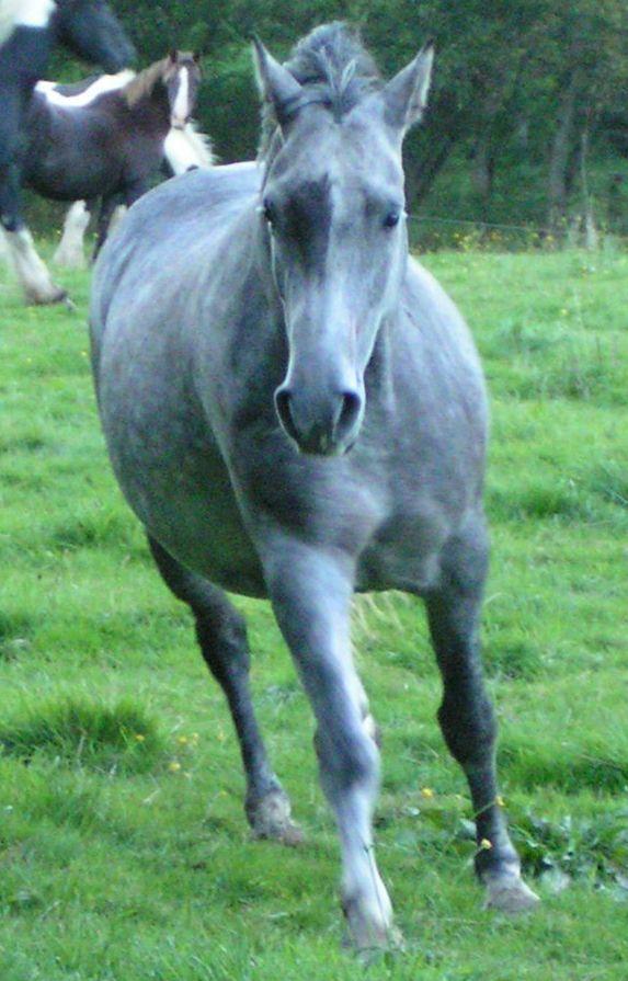 Con caballos videos de tias pilladas desnudas 32